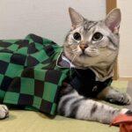 鬼滅の刃ファンの猫に市松模様の服を着せてみました